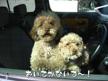 100407_sakura_jikka